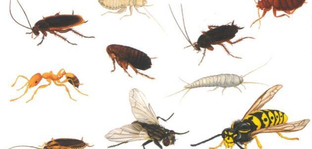 انواع الحشرات بالصور