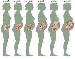 مراحل نمو الجنين بالاشهر