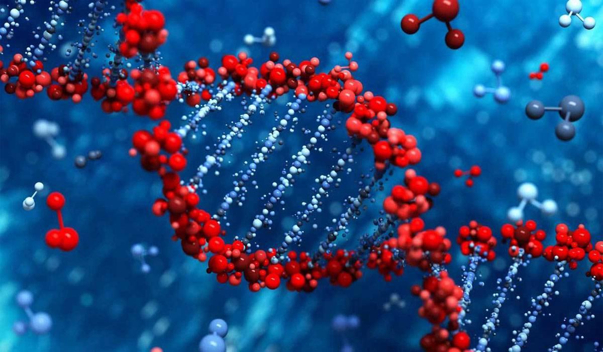 ما هي الهندسة الوراثية؟ وما تخصصاتها؟ وما مجالاتها؟