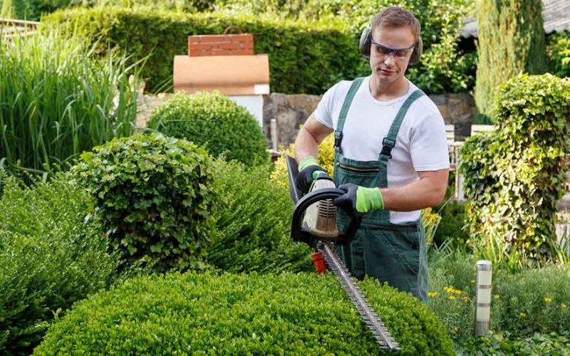 شركة تنظيف الحدائق