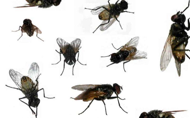 أنواع الحشرات بالمنزل