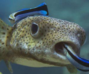 فوائد الاسماك علي العظام