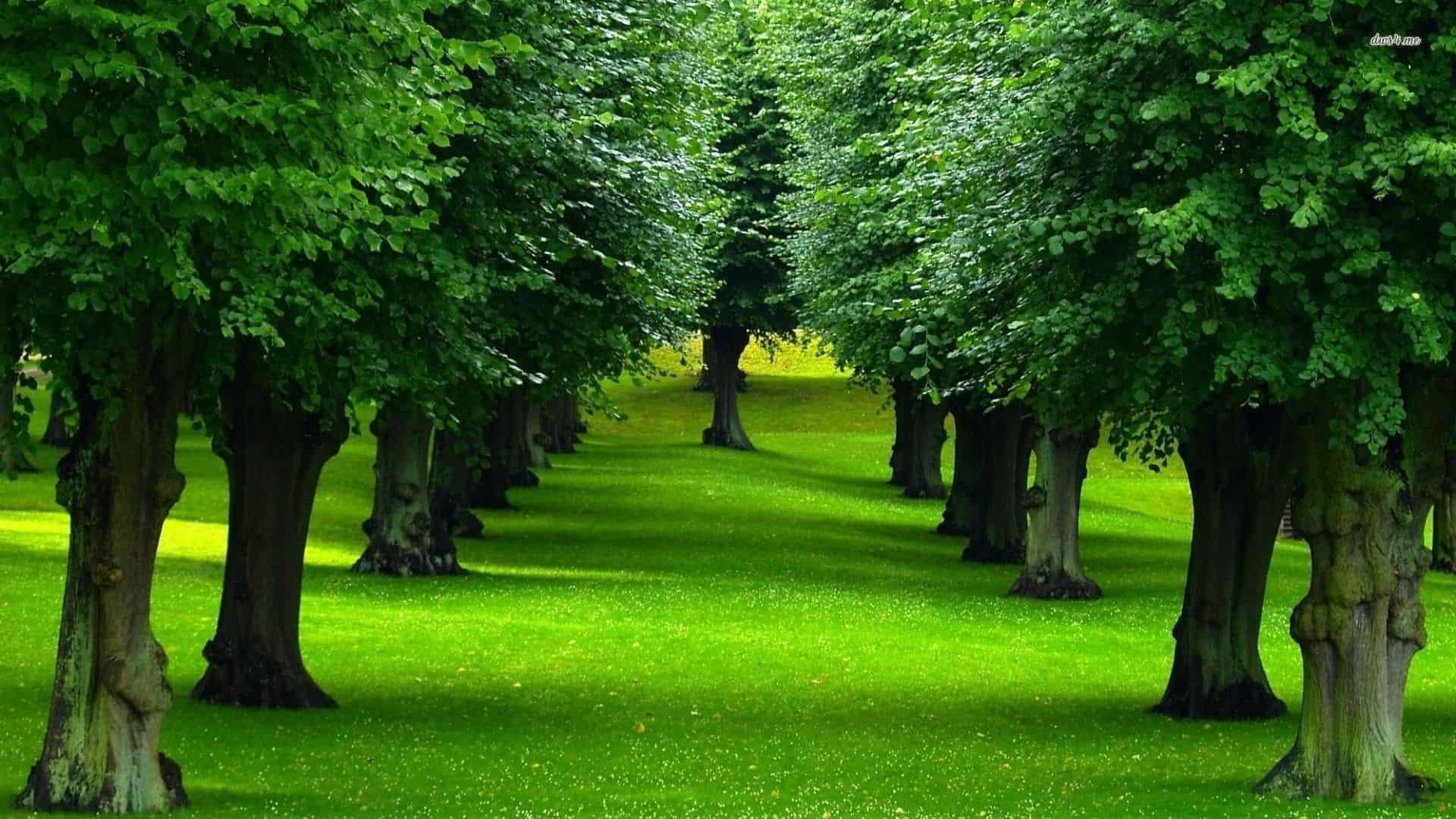 ماهي أضخم أشجار في العالم