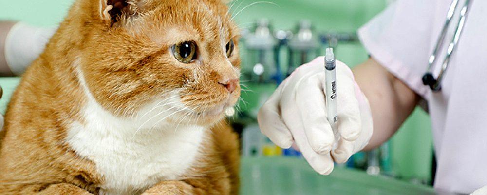 أضرار عدم تطعيم القطط