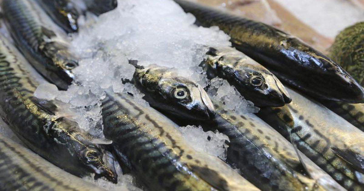 فوائد سمك الماكريل لصحة الجسم