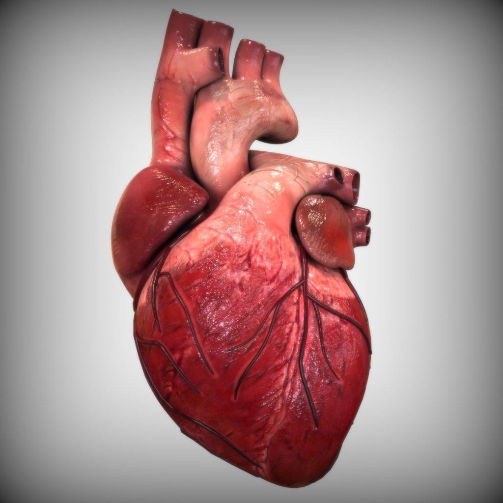 انواع صمامات القلب
