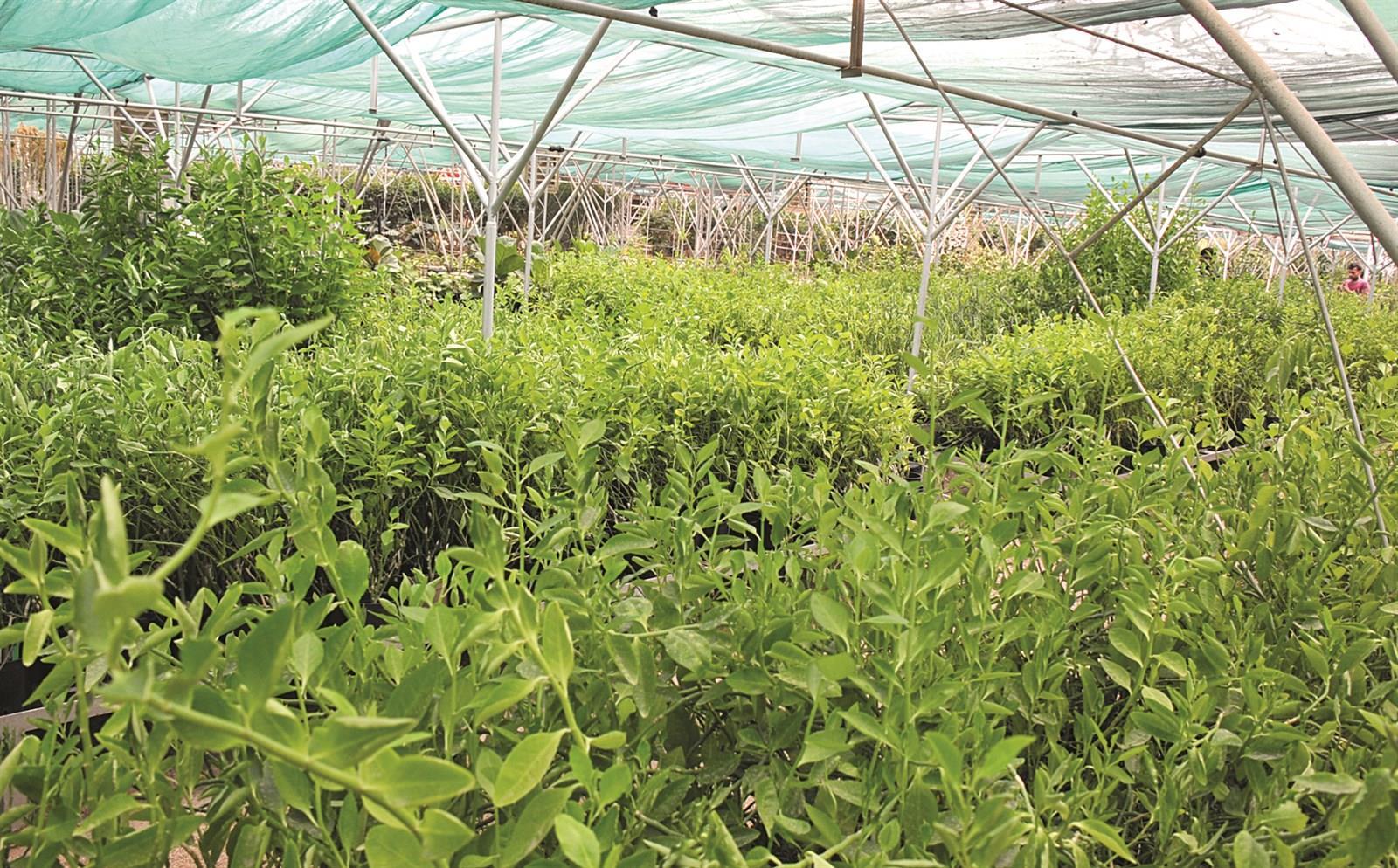 كيفية تطور الزراعة في دولة الكويت