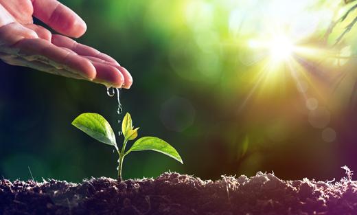 زرع البذور في المنام