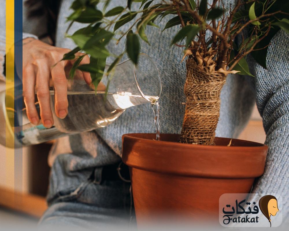 نصائح هامة لزراعة النباتات المنزلية