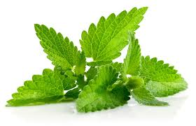 fresh-mint-leaves