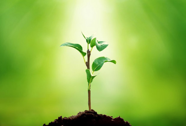 ما هي فوائد النباتات؟ وما هي أجزائها؟