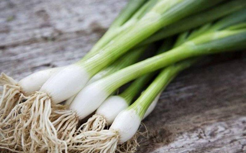 فوائد البصل الأخضر لصحة الجسم