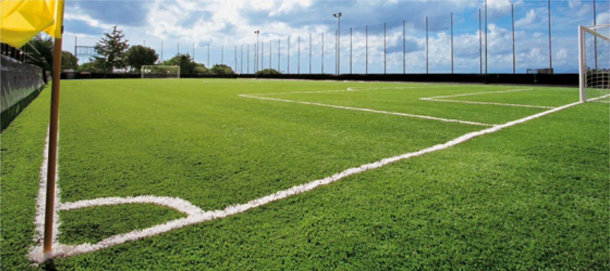 عشب ملاعب كرة القدم