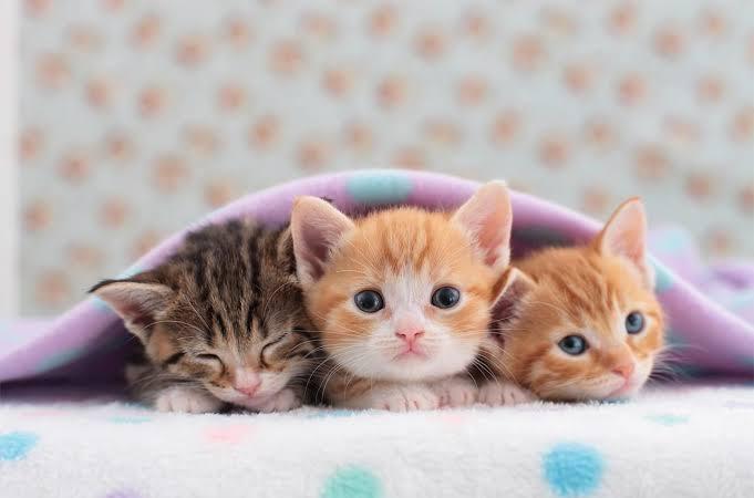 ماهي مراحل نمو القطط الصغيرة