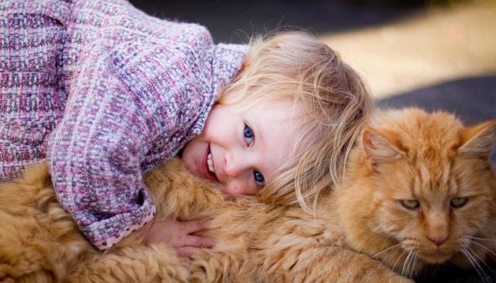 أضرار نوم القطط بجوار الإنسان