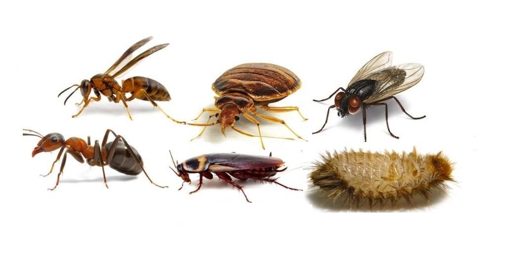 كيف نتخلص من الحشرات