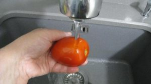 مرحلة غسيل الطماطم بالصور