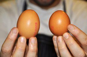 عدد2 بيضة للباشميل