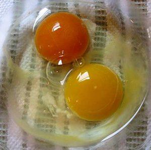 عدد 2 من صفار البيض من مطبخ فتكات لتحضير موس الشوكولاته