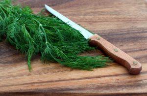فوائد نبات الشبت في استخدمه في توابل طعامك
