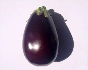 www.fatakat-a.com eggplant-american